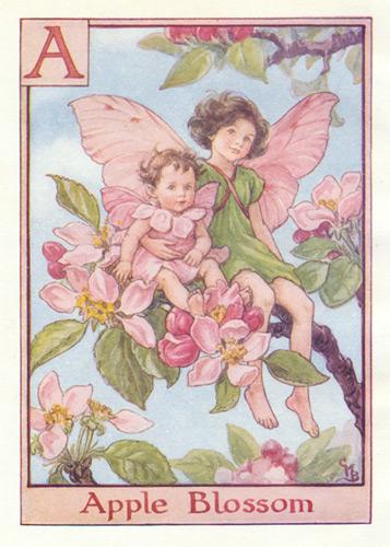 Flower fairies alphabet genuine antique art