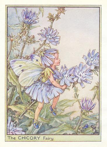 The Chicory Fairy Genuine Antique Print 1950