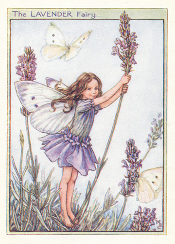 The Lavender Fairy Genuine Antique Print 1950
