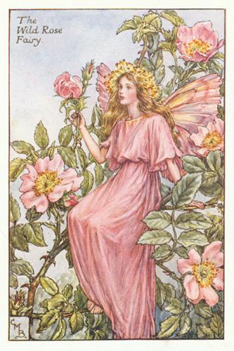 The wild rose fairy genuine antique print 1930s title the wild rose fairy product code 70 type of print genuine antique print age guaranteed 1930s condition very good mightylinksfo